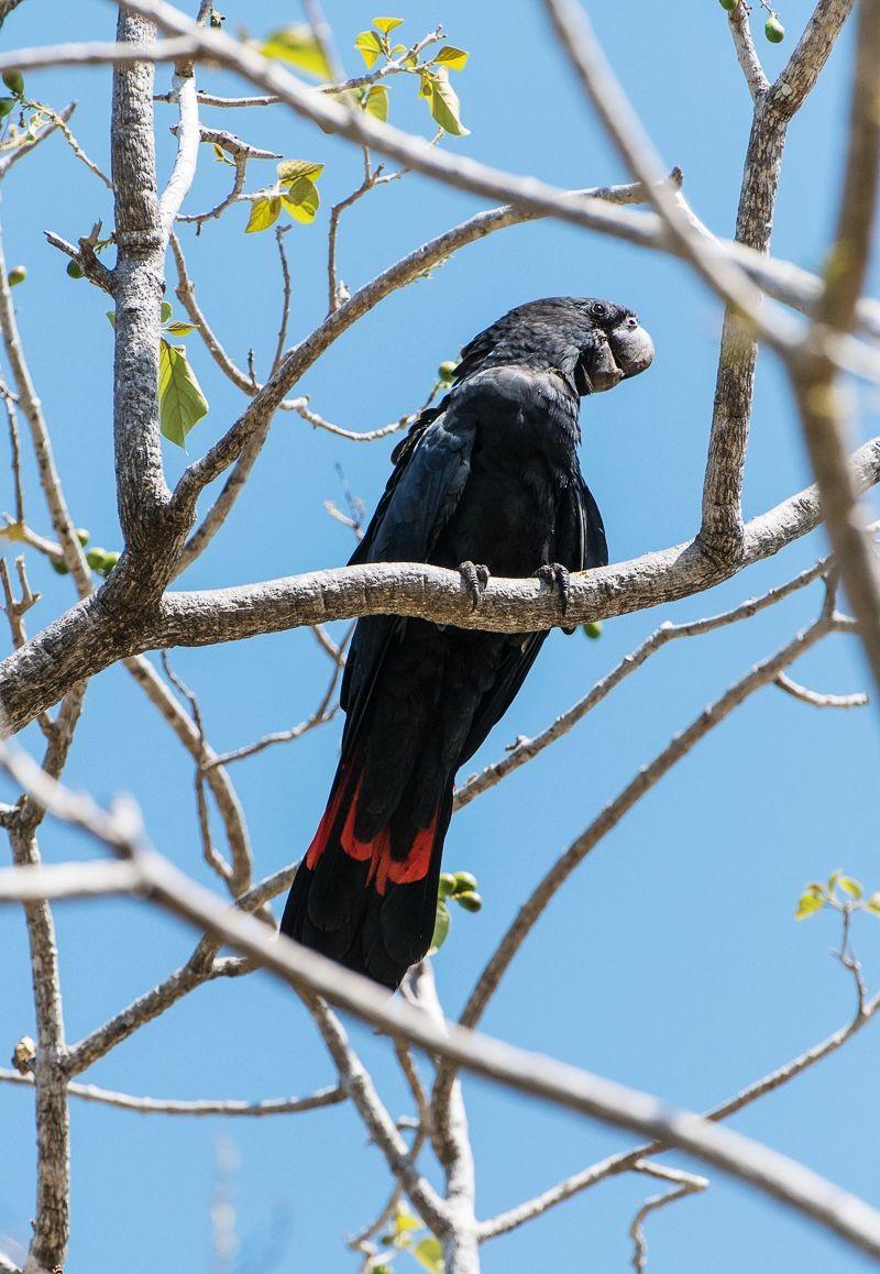 保护区内的澳大利亚鹦鹉_图1-16