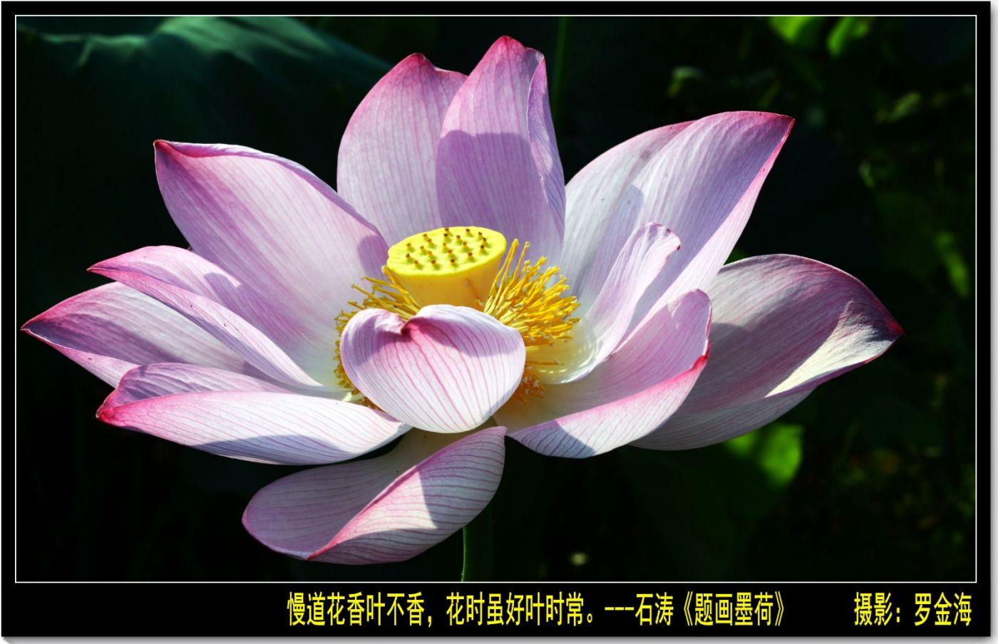 定风波·夏至日(诗词三首)_图1-5