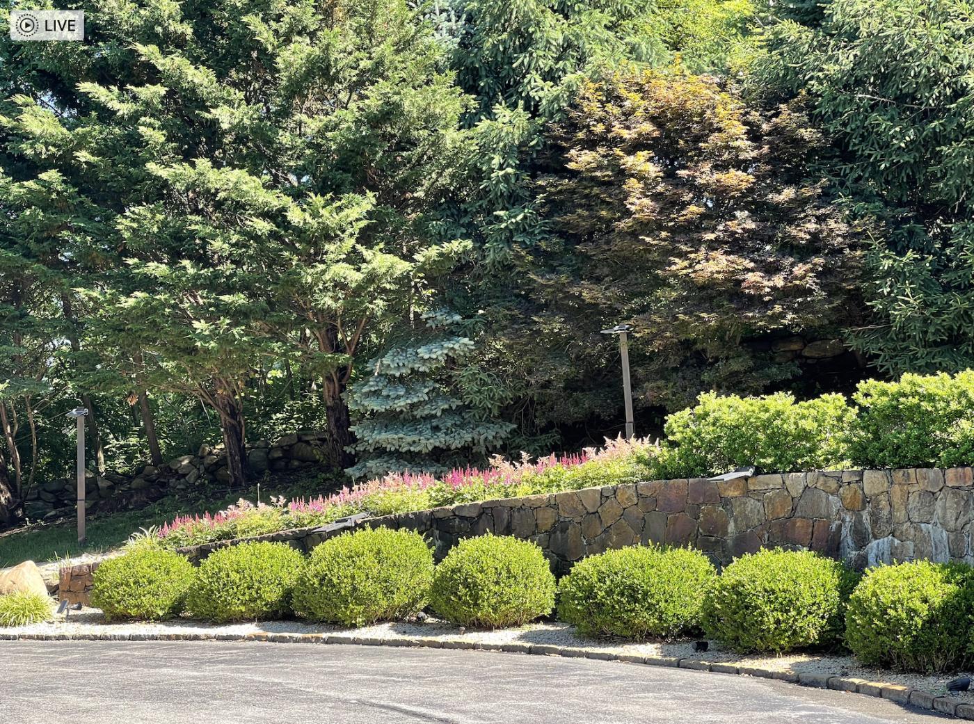 草是自己家的绿,花是自己家的香_图1-2