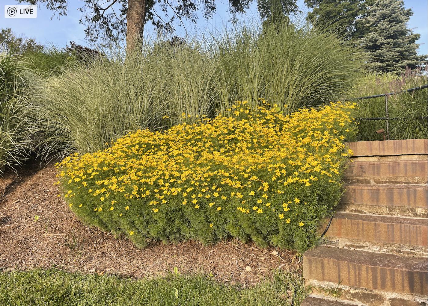 草是自己家的绿,花是自己家的香_图1-15