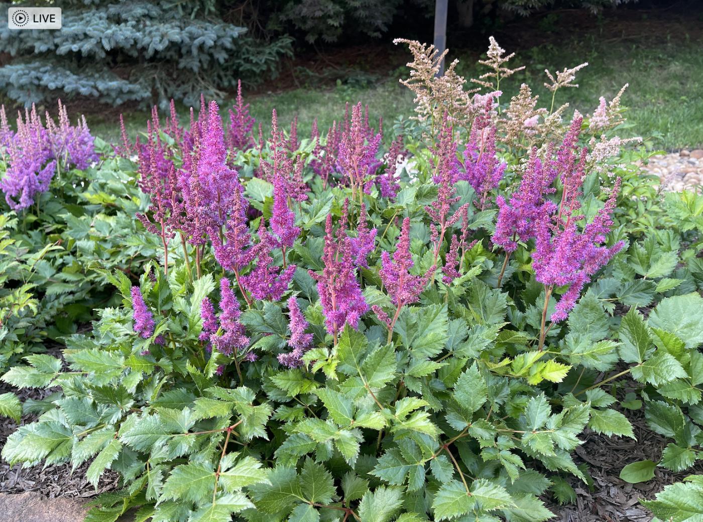 草是自己家的绿,花是自己家的香_图1-16