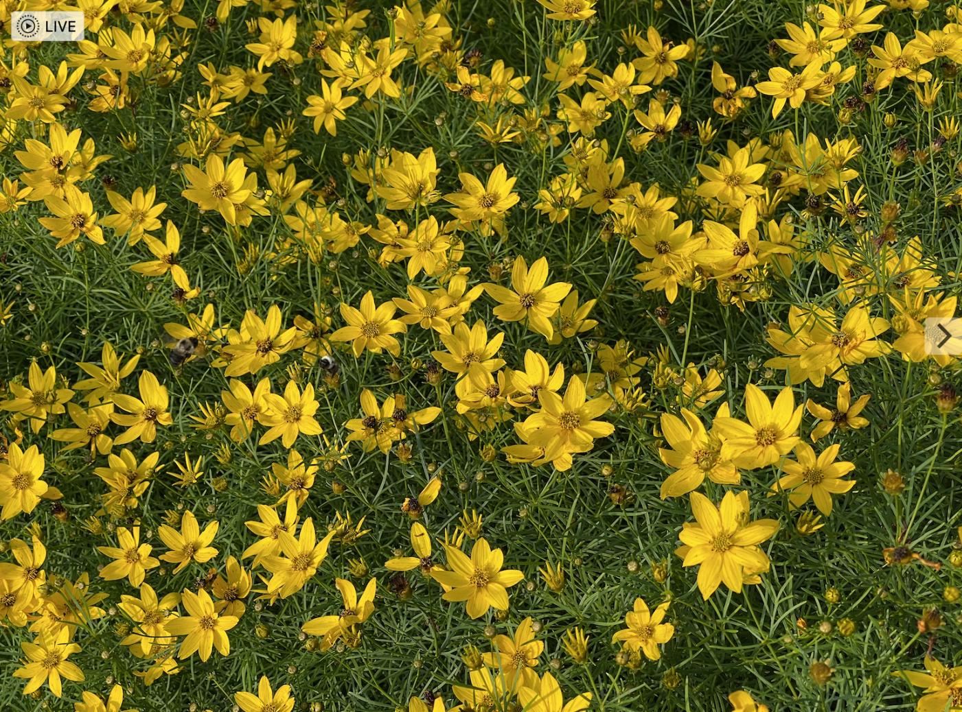 草是自己家的绿,花是自己家的香_图1-18