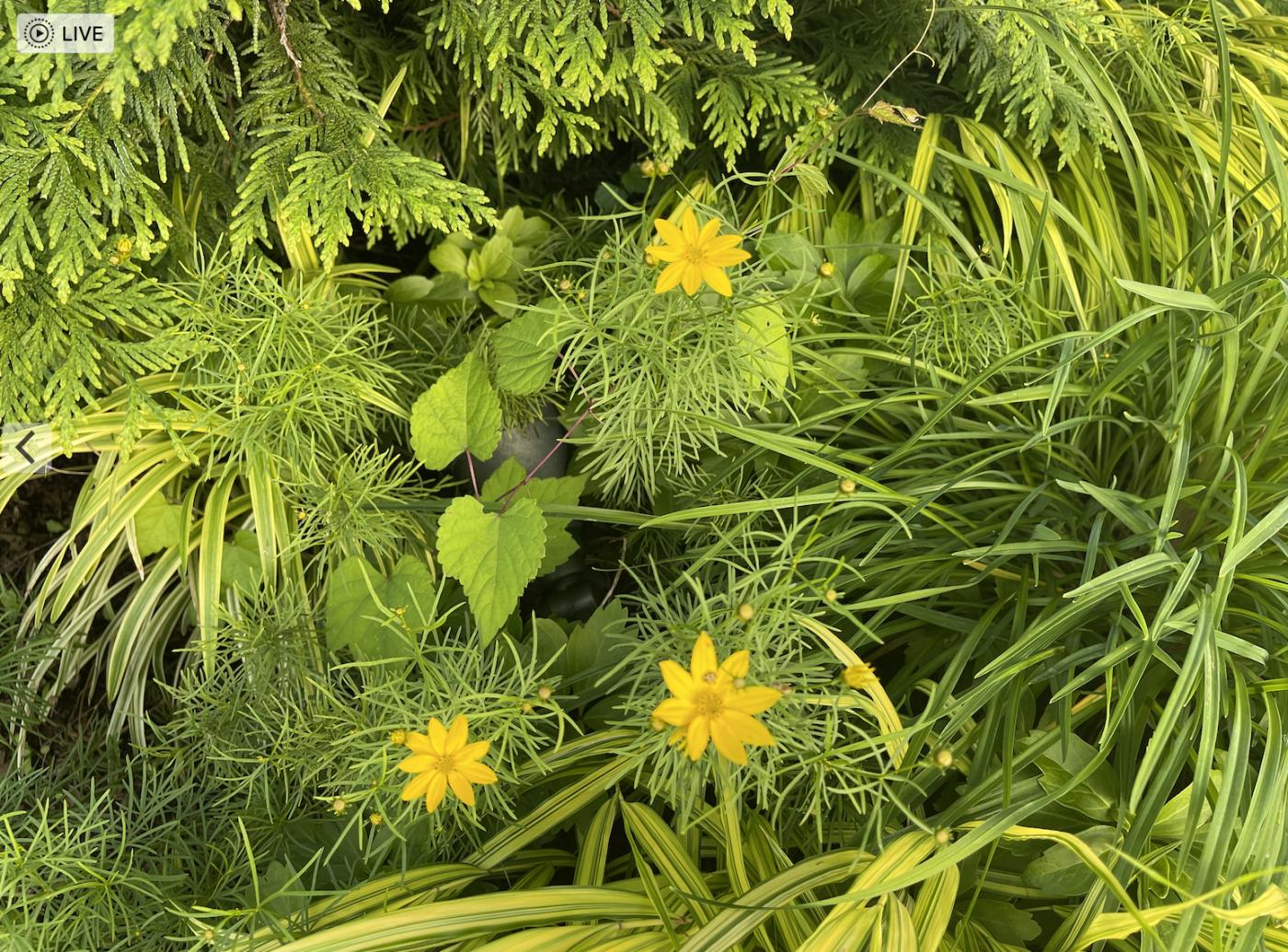 草是自己家的绿,花是自己家的香_图1-19