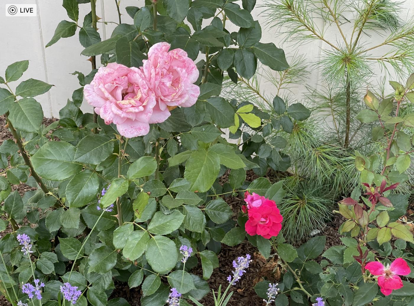 草是自己家的绿,花是自己家的香_图1-23