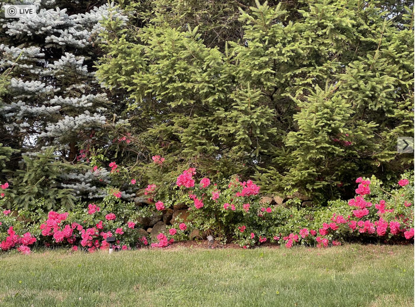 草是自己家的绿,花是自己家的香_图1-27