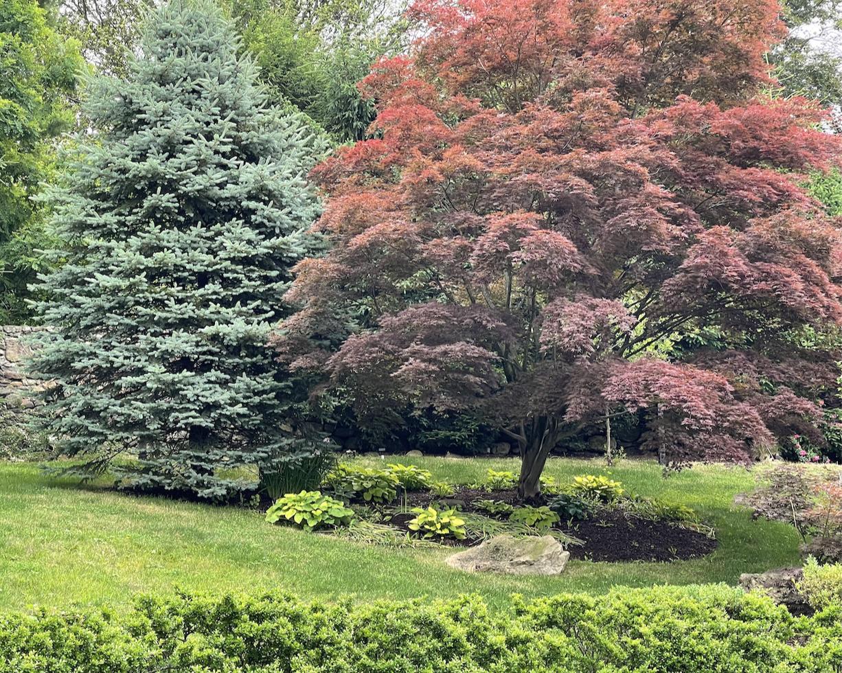 草是自己家的绿,花是自己家的香_图1-41