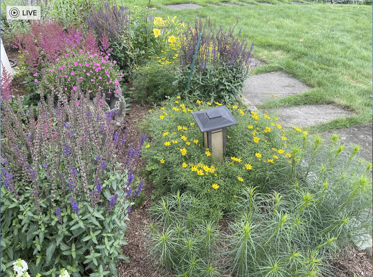草是自己家的绿,花是自己家的香_图1-43