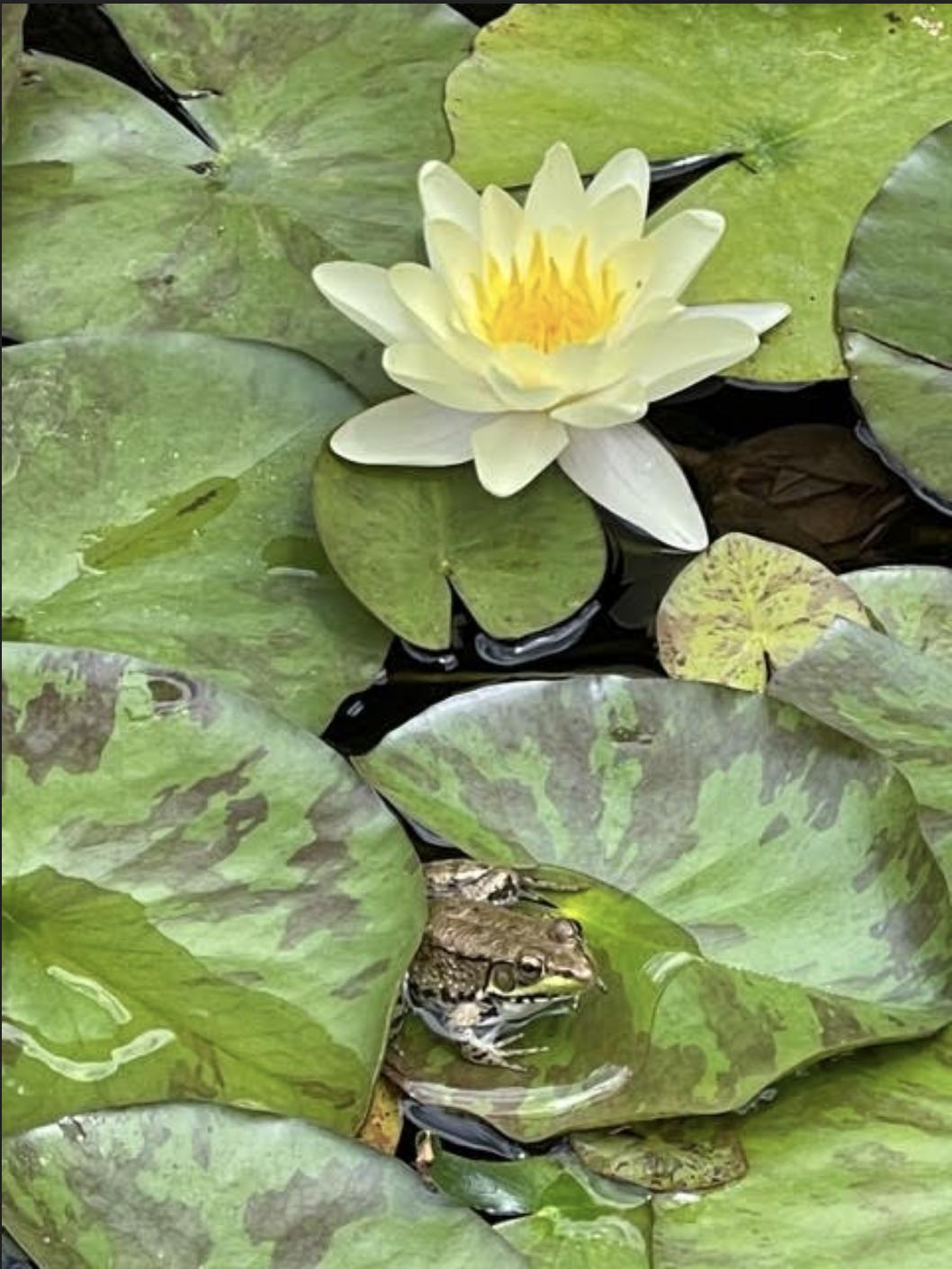 草是自己家的绿,花是自己家的香_图1-45