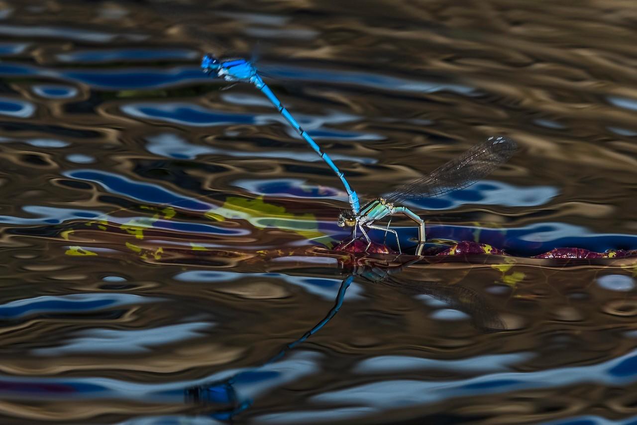 小蜻蜓,我的舞台_图1-6