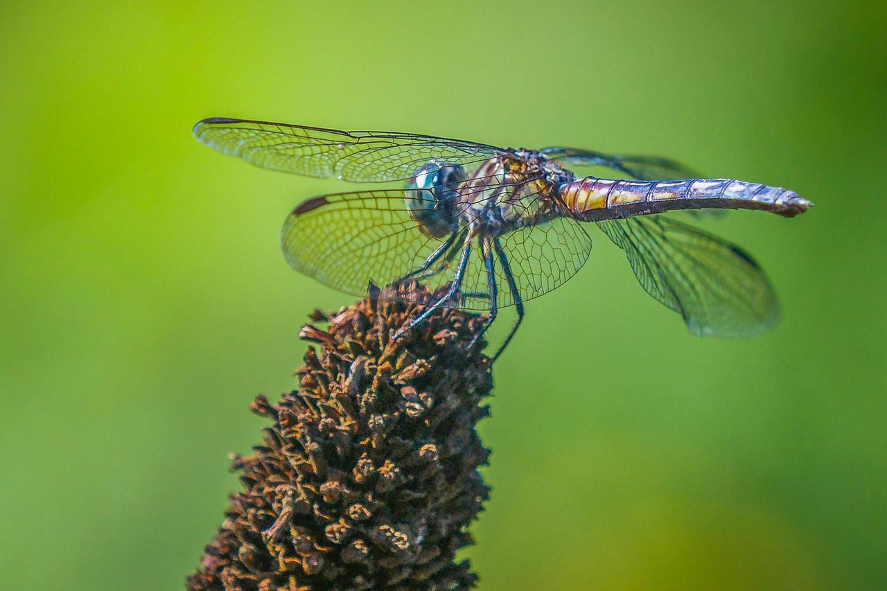 小蜻蜓,我的舞台_图1-4