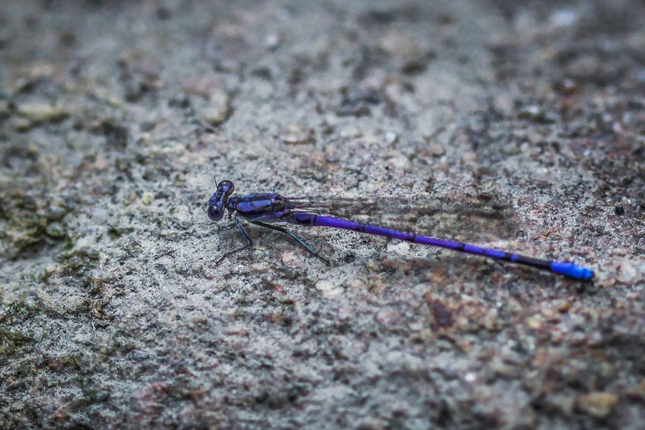 小蜻蜓,我的舞台_图1-10