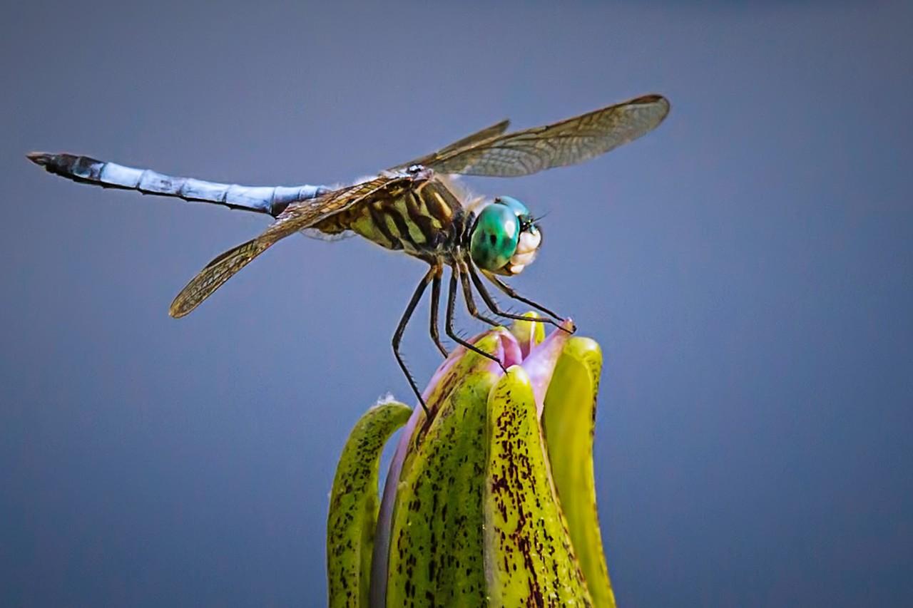 小蜻蜓,我的舞台_图1-7