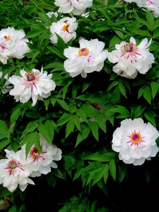 花卉日记-59_图1-3