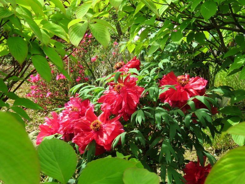 花卉日记-59_图1-6