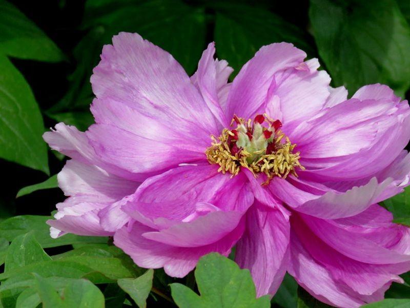 花卉日记-59_图1-7