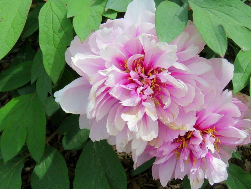 花卉日记-59_图1-8