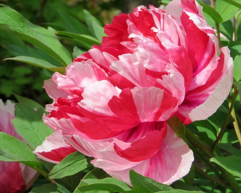 花卉日记-59_图1-10