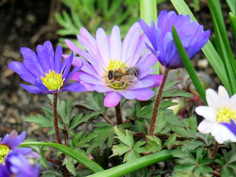 花卉日记-59_图1-12