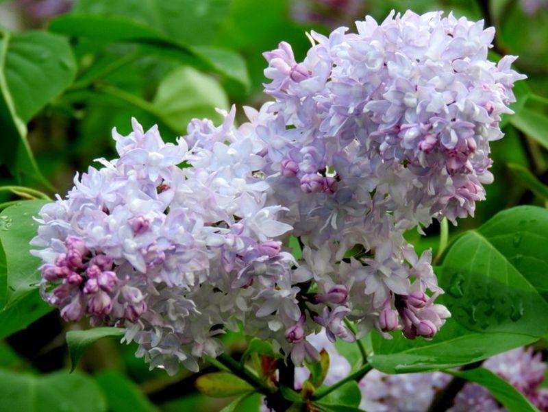 花卉日记-59_图1-13