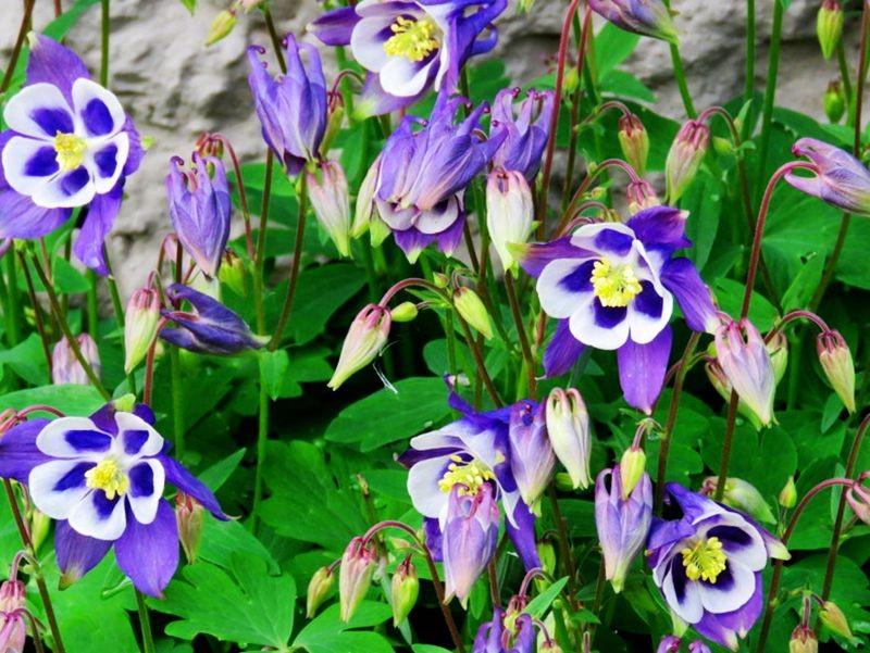 花卉日记-59_图1-14