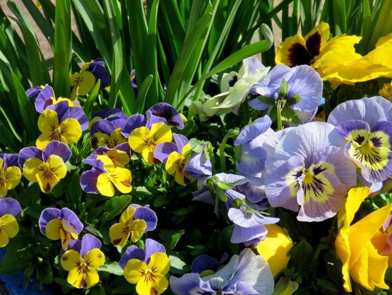 花卉日记-59_图1-23