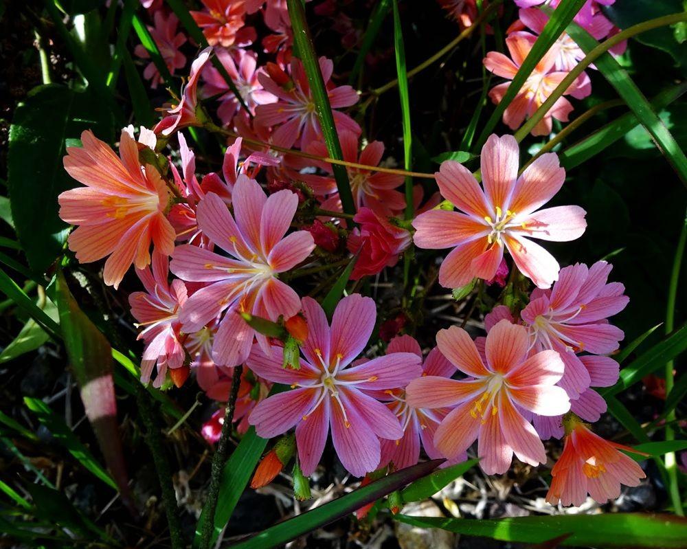 花卉日记-64_图1-7