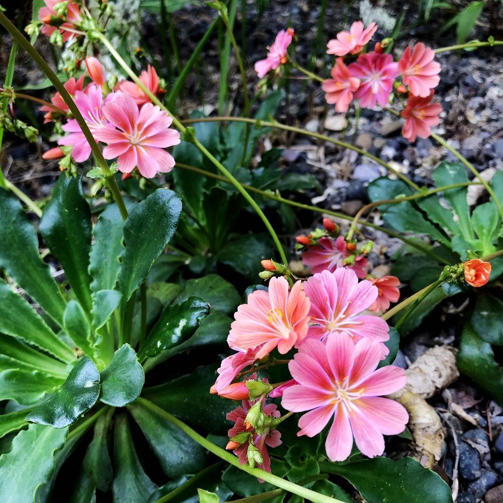 花卉日记-64_图1-8