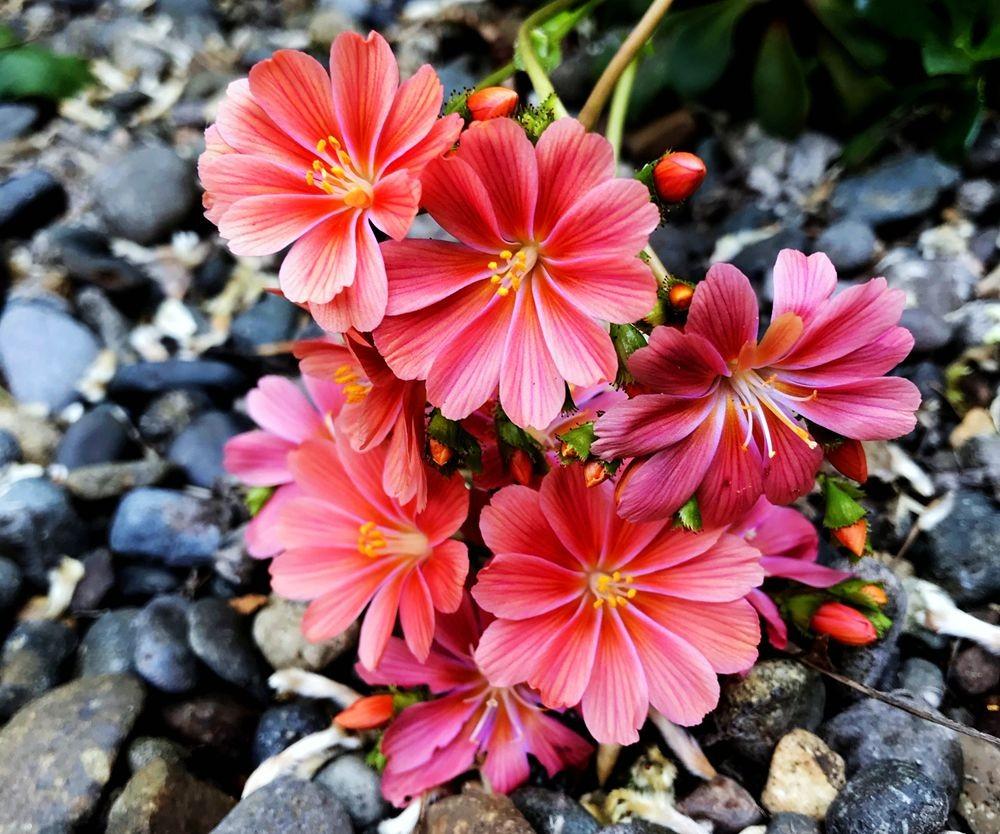 花卉日记-64_图1-9