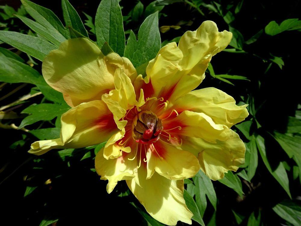 花卉日记-64_图1-10