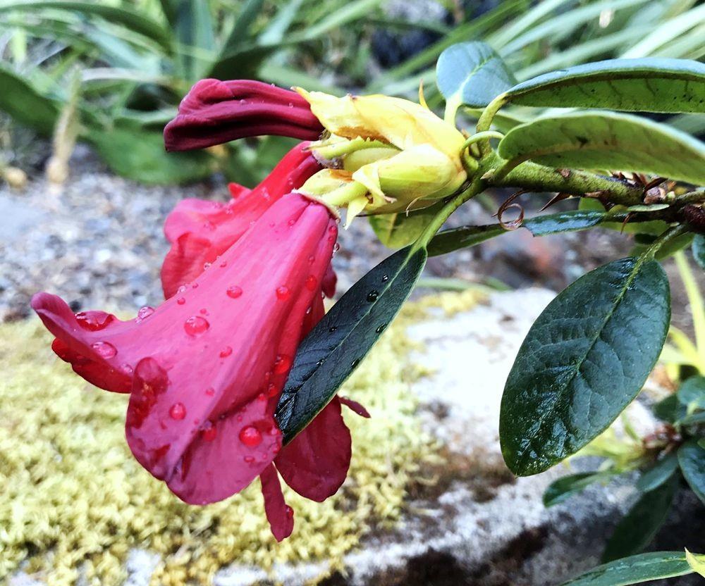 花卉日记-64_图1-20