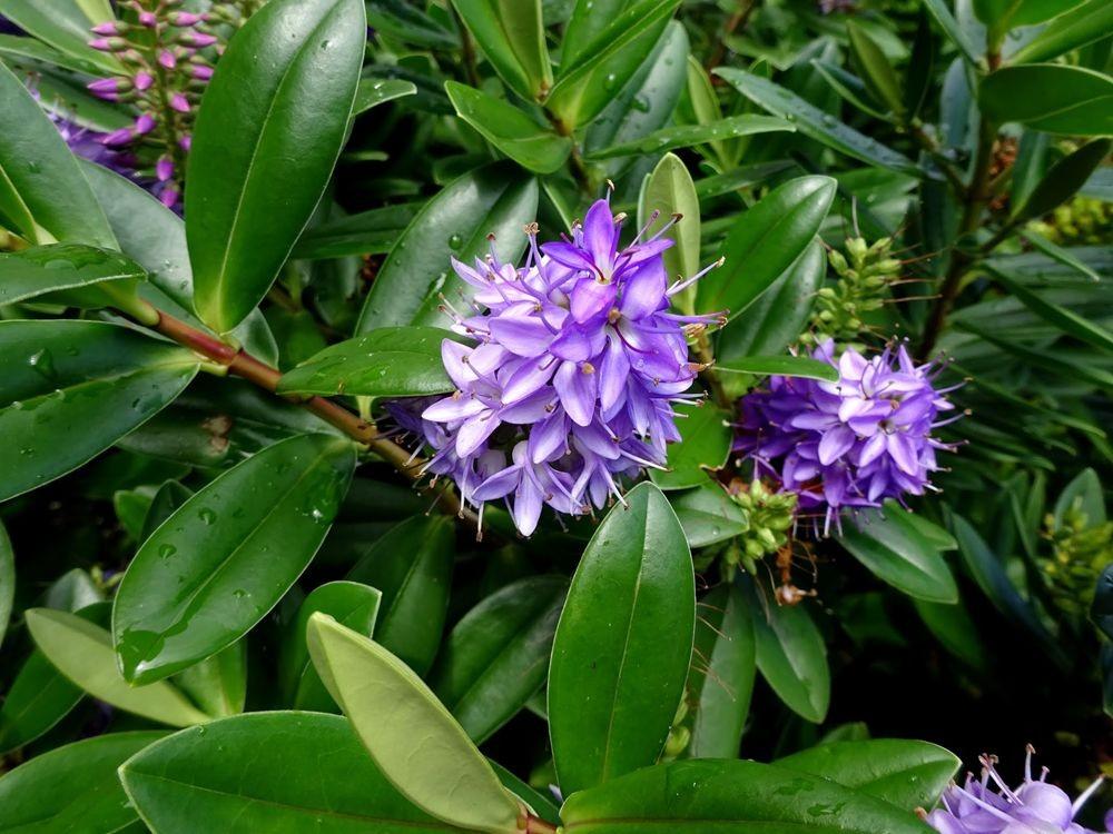 花卉日记-64_图1-22