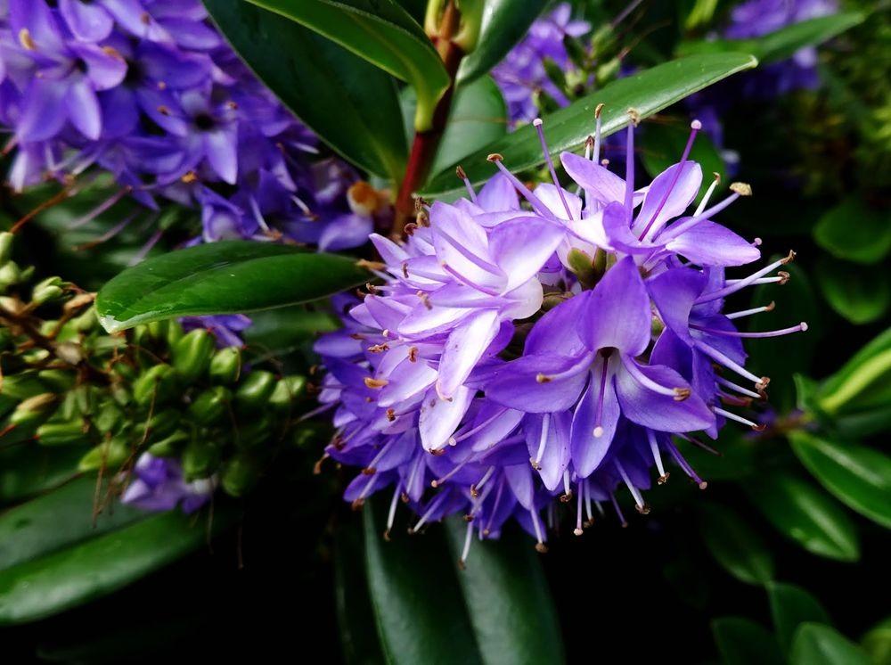 花卉日记-64_图1-24