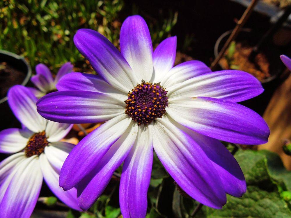 花卉日记-65_图1-1