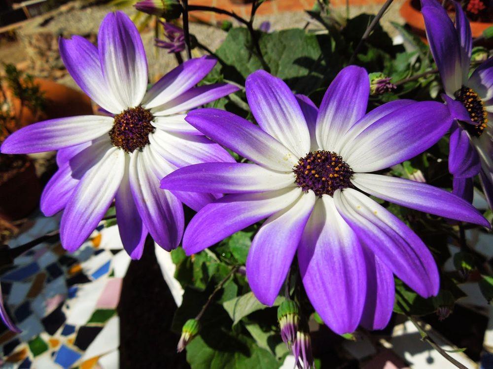花卉日记-65_图1-2
