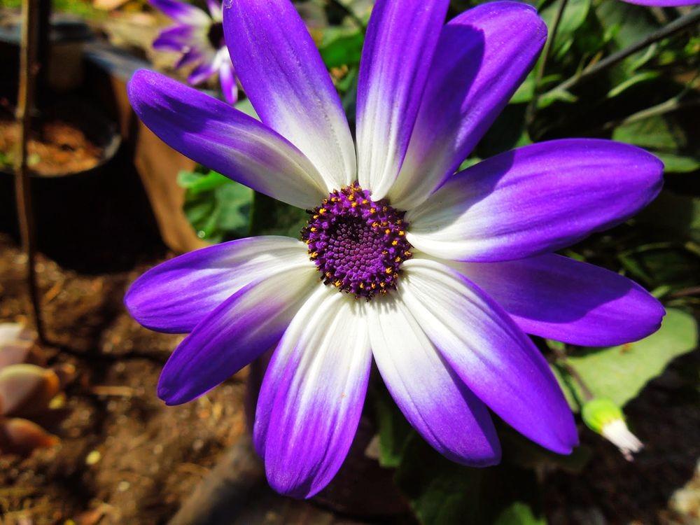 花卉日记-65_图1-3