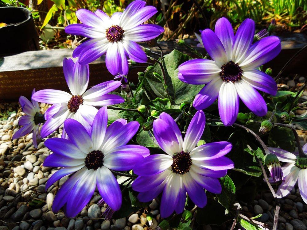 花卉日记-65_图1-4
