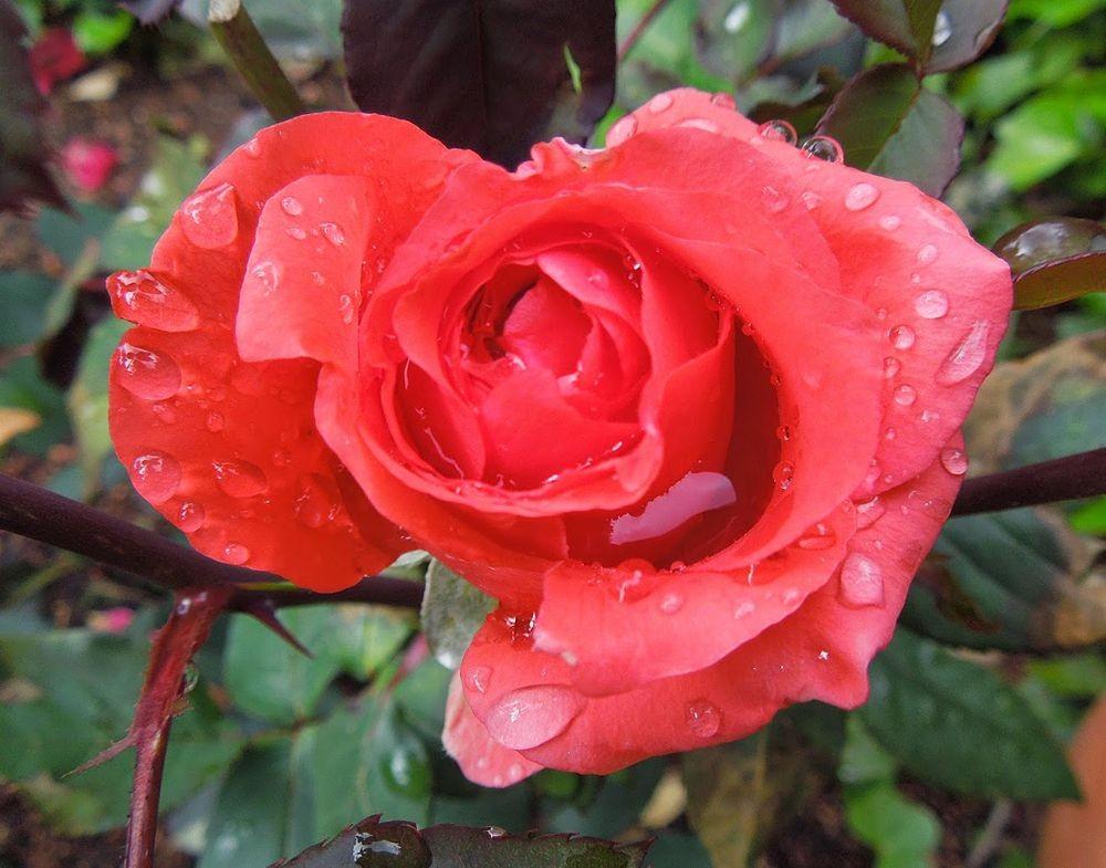 花卉日记-65_图1-5