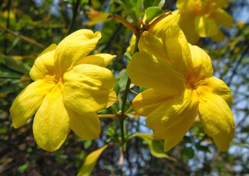 花卉日记-65_图1-7