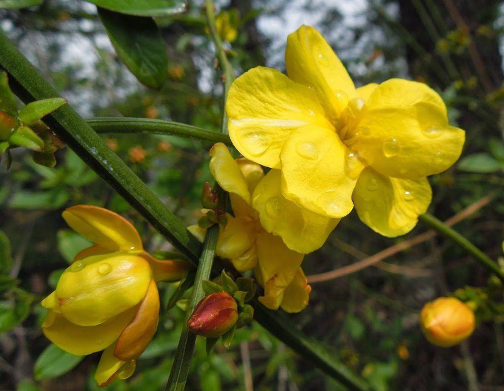 花卉日记-65_图1-8