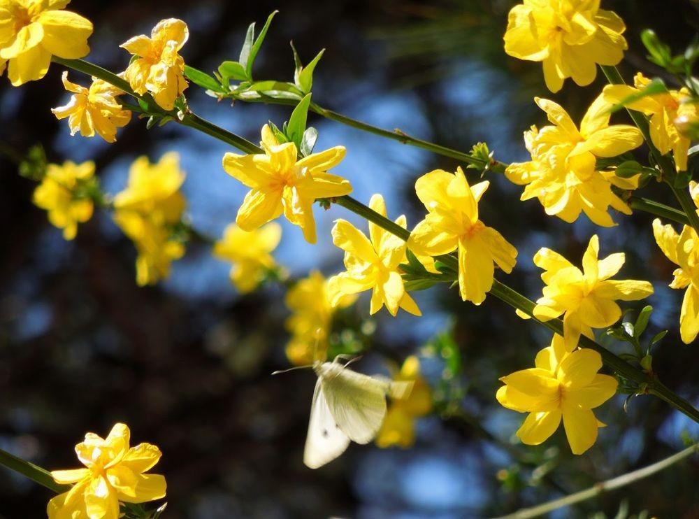 花卉日记-65_图1-10