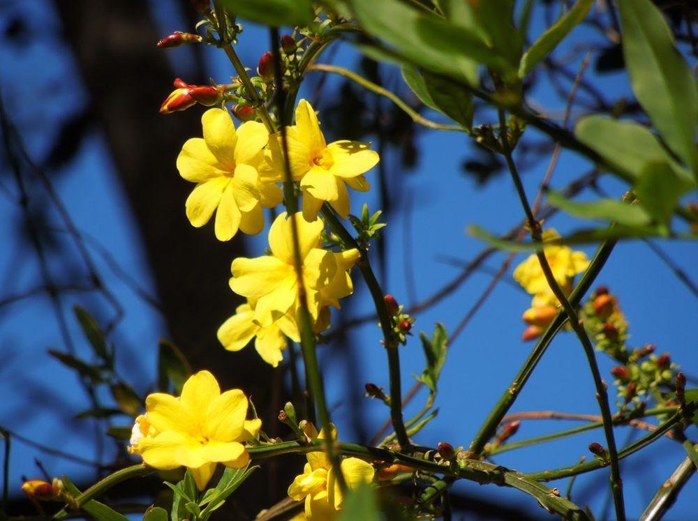 花卉日记-65_图1-11