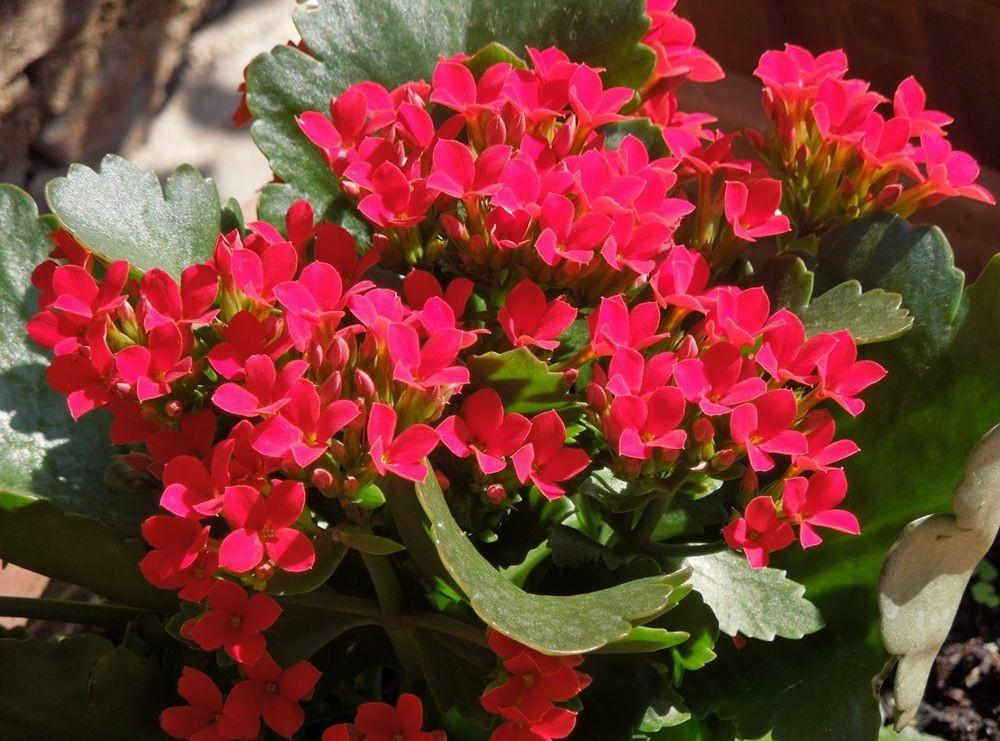 花卉日记-65_图1-17