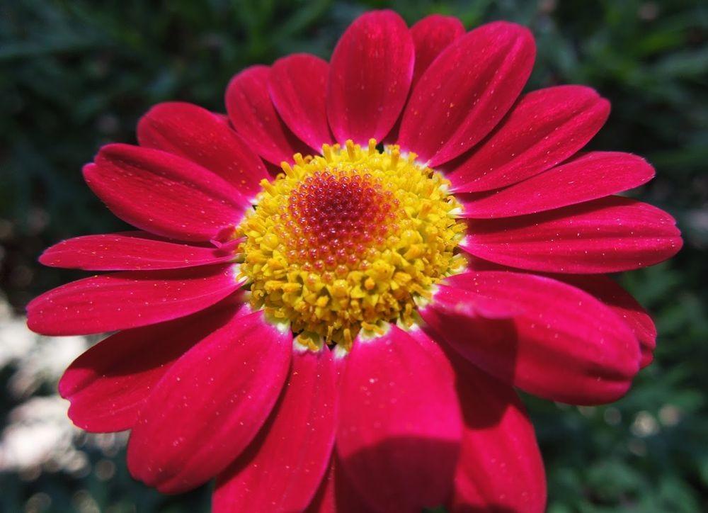 花卉日记-65_图1-18