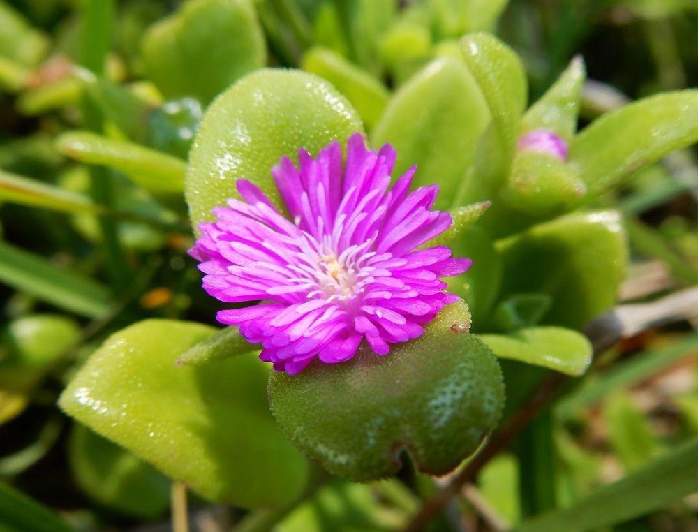 花卉日记-65_图1-19