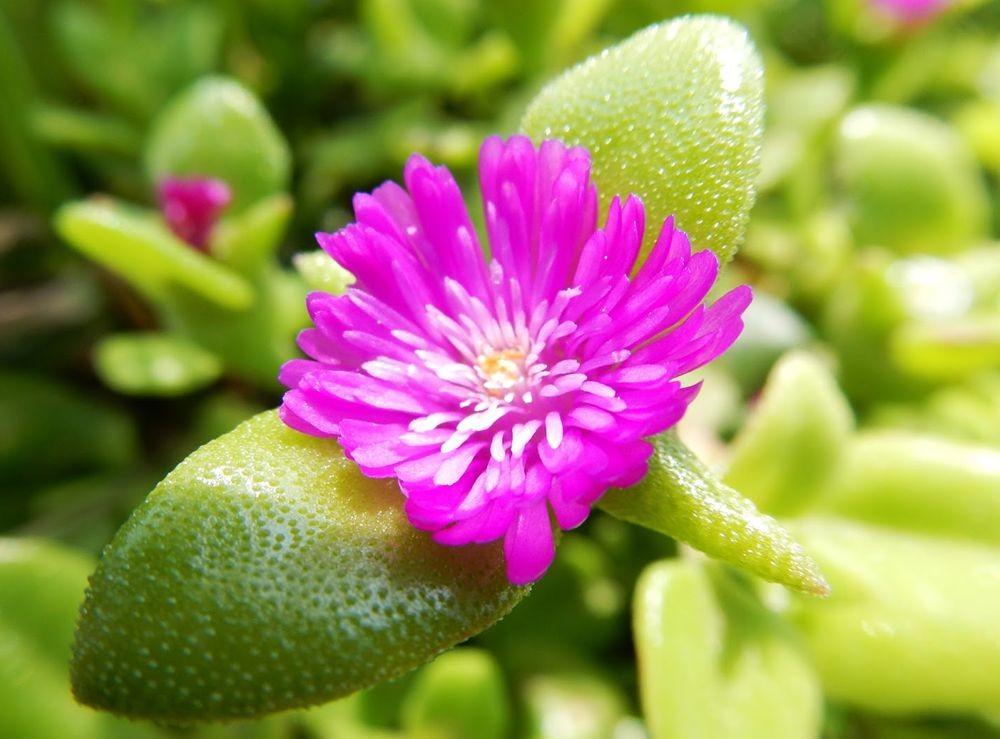 花卉日记-65_图1-20
