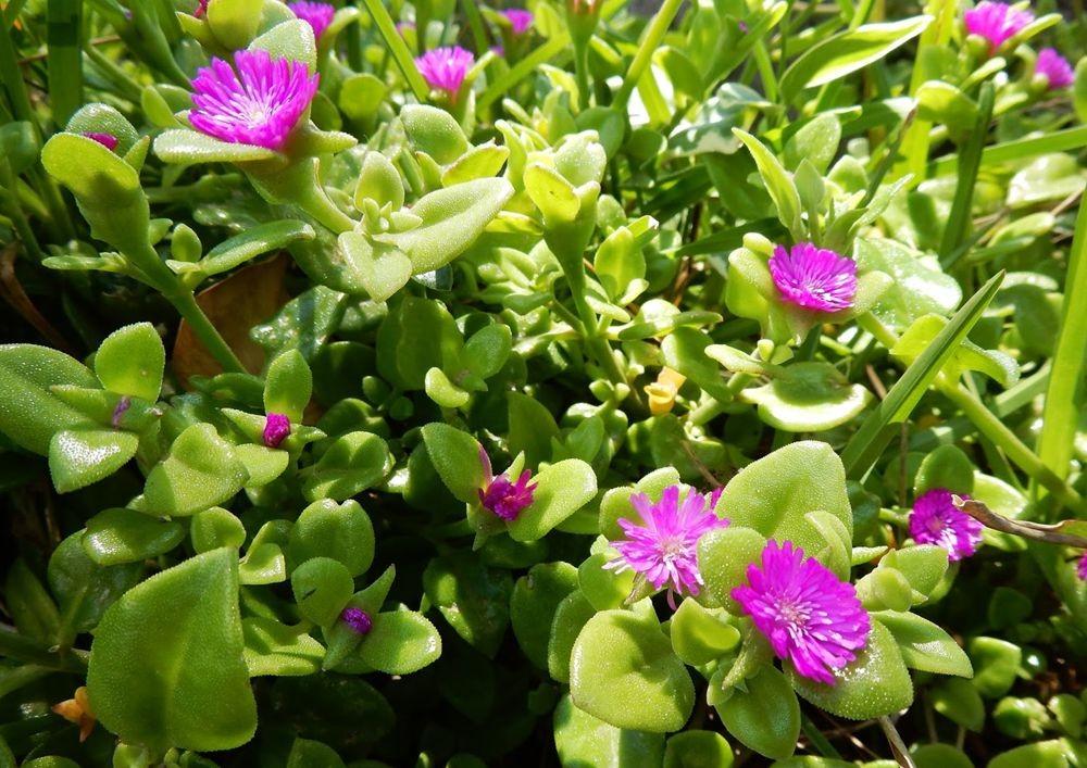 花卉日记-65_图1-21