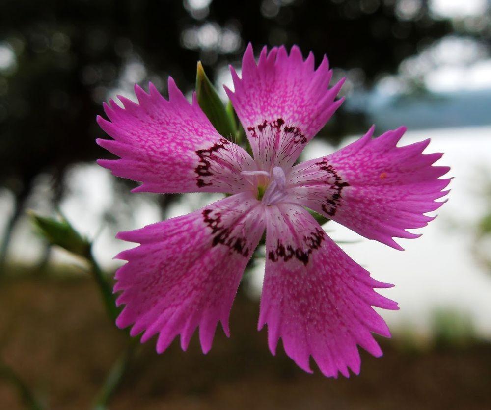 花卉日记-66_图1-1