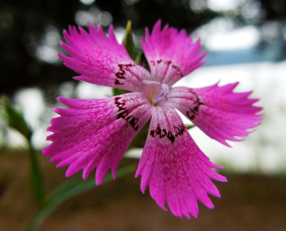 花卉日记-66_图1-2
