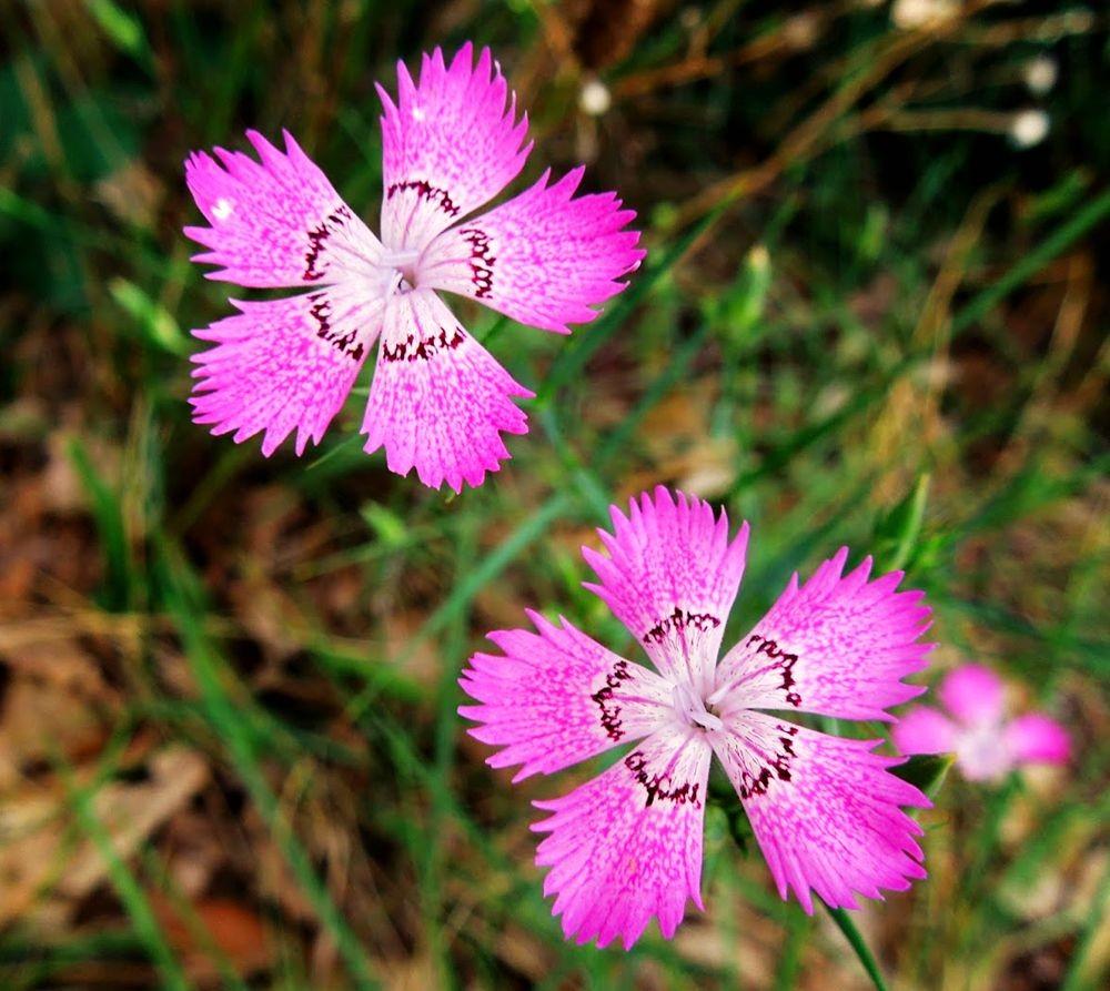 花卉日记-66_图1-3