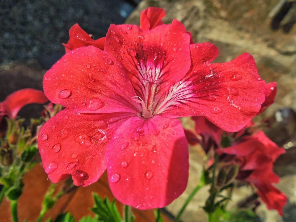 花卉日记-66_图1-4